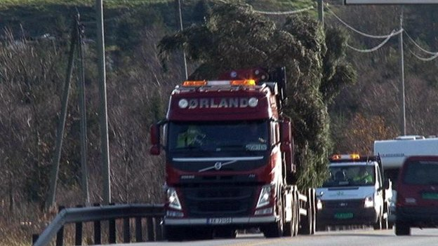Tree on lorry