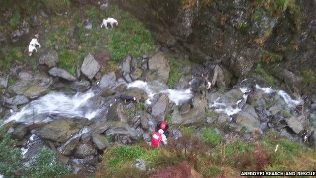 Dogs rescued from gorge