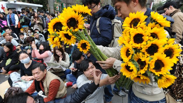 A volunteer provides sunflowers to student protesters as a sign of support, outside the parliament as ongoing protests by thousands of people continue for another day in Taipei on 22 March, 2014