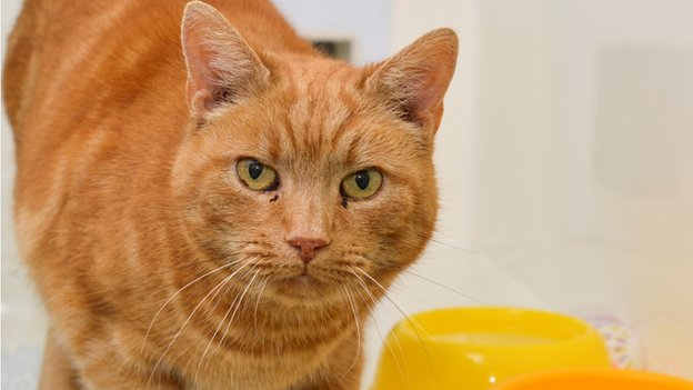Garfield The Cat Reunited With Owner After Seven Lost Years Bbc News