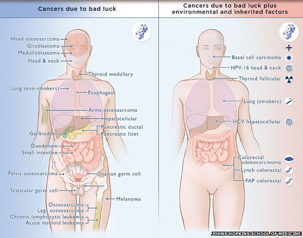 diagram showing different kinds of cancer