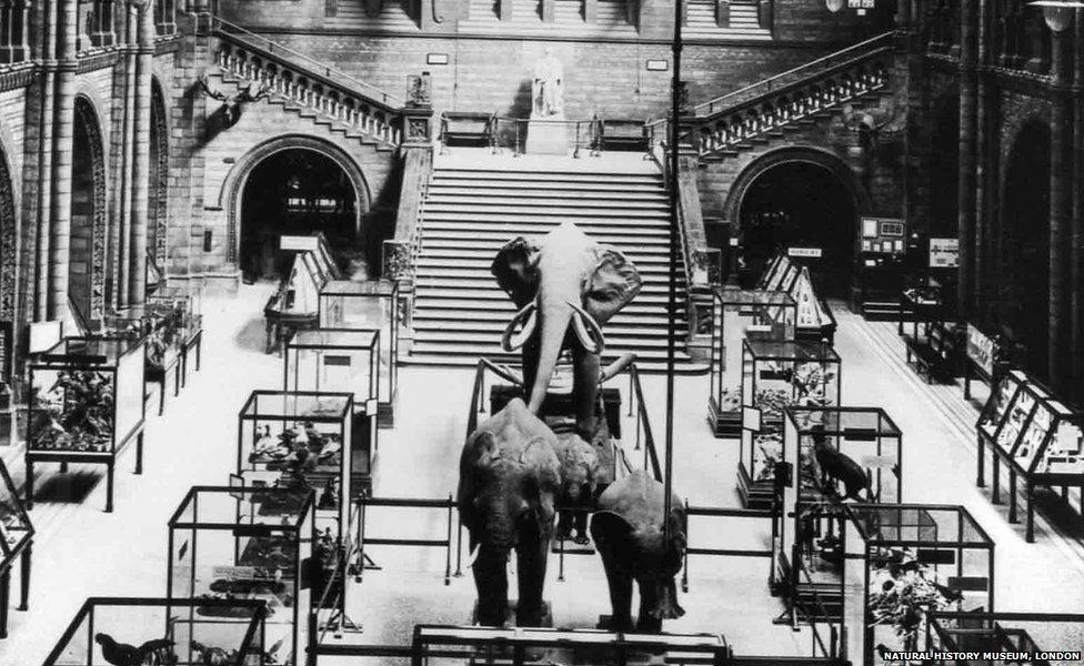 1924 elephants