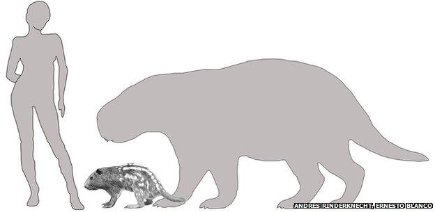 size comparison of Josephoartigasia monesi