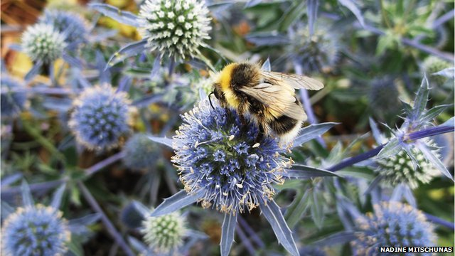 Flowers in gardens attract bees