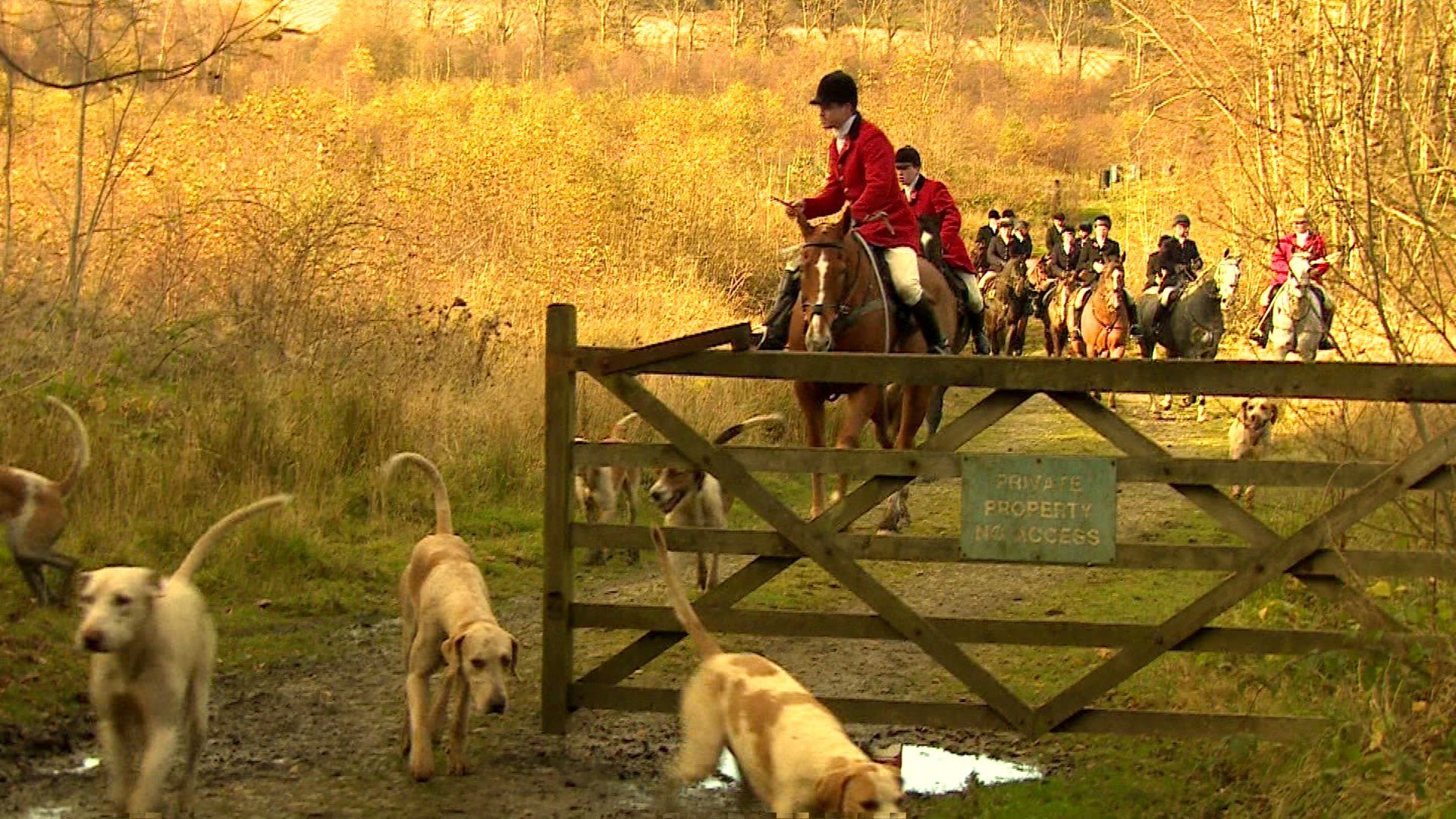 Fox hunt and hounds