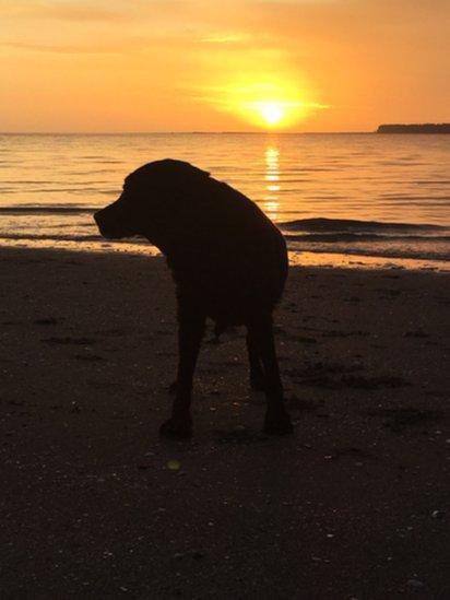 Dog with sunrise