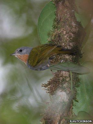 Madanga (Image: Rob Hutchinson/Birdtour Asia)