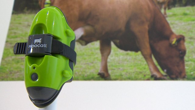 A device that texts a farmer when one of his cows goes into labour.