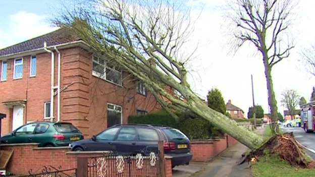 Tree hitting house
