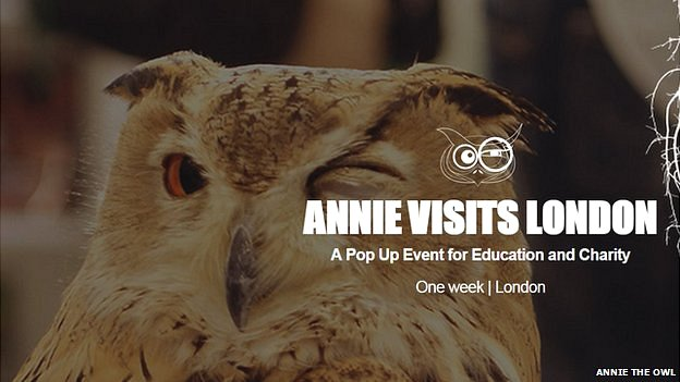Annie The Owl promotional image