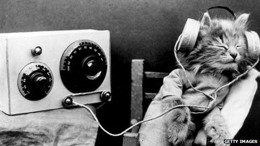 cat listening to old fashioned radio