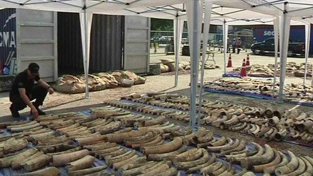 Seized ivory in Thailand