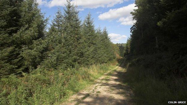Cropton Forest
