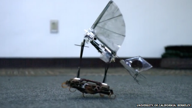 Robotic roach and bird