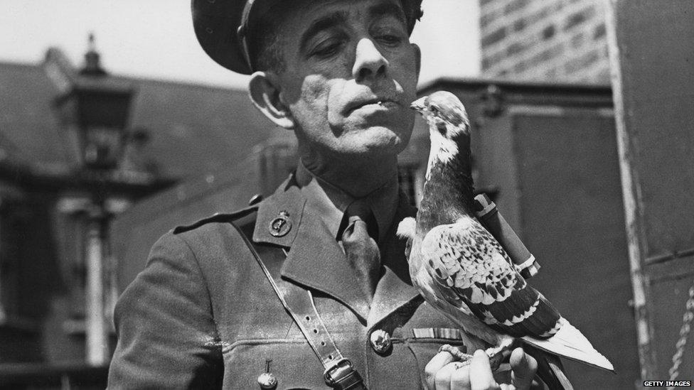 A WW2 carrier pigeon