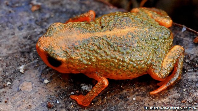 orange and green frog