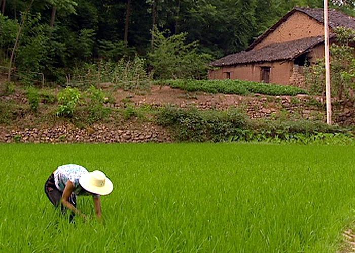 Xiao Zhang in White Horse Village, 2006