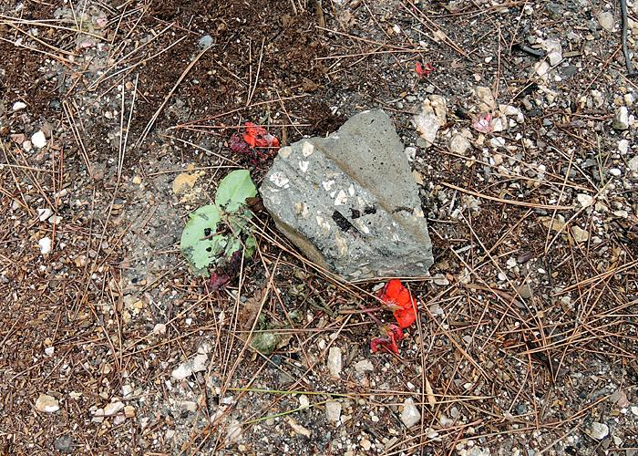 Two weeks later - forest memorial found destroyed