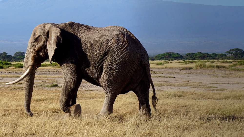 Learn facts about elephants for