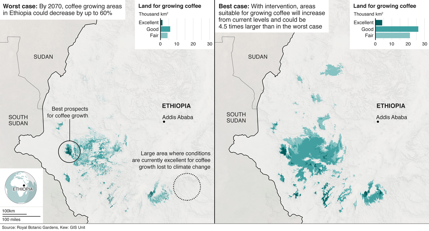 Maps showing the change in land suitable for coffee growth in Ethiopia based on research from Kew Gardens