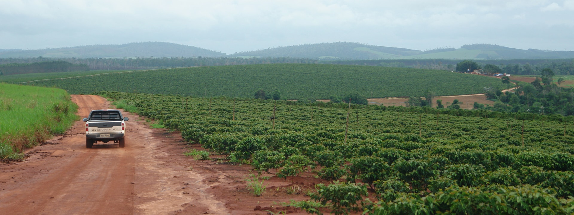 Coffee plantations in Jaguare, Espirito Santo state in Brazil
